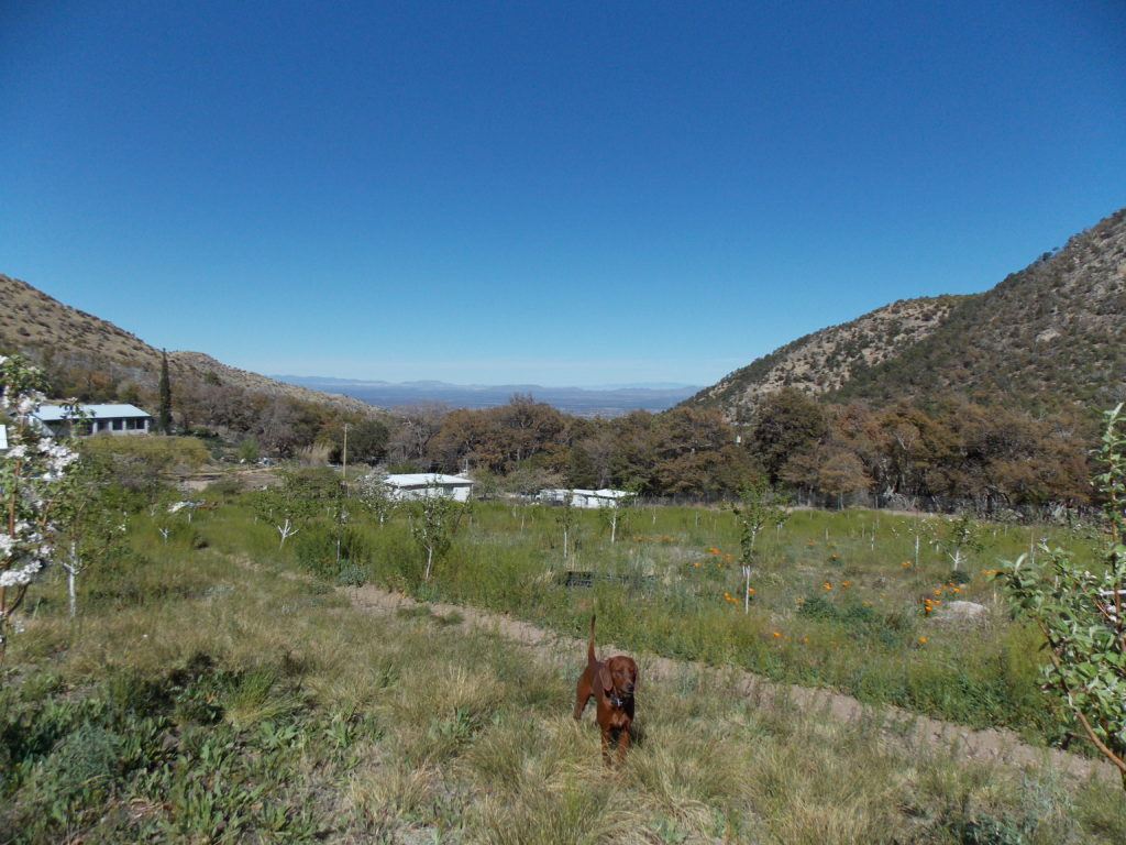 View_of_Valley, Red-bone Hounds on Property